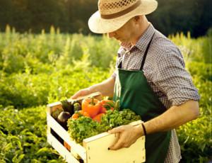Nell'Estremo Oriente russo le startup agricole avranno finanziamenti pubblici / Le domande di partecipazione al concorso sono pervenuti dai 62 agrari