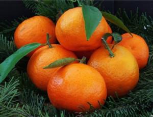 Scienziati russi sperimentano mandarini e limoni resistenti al gelo